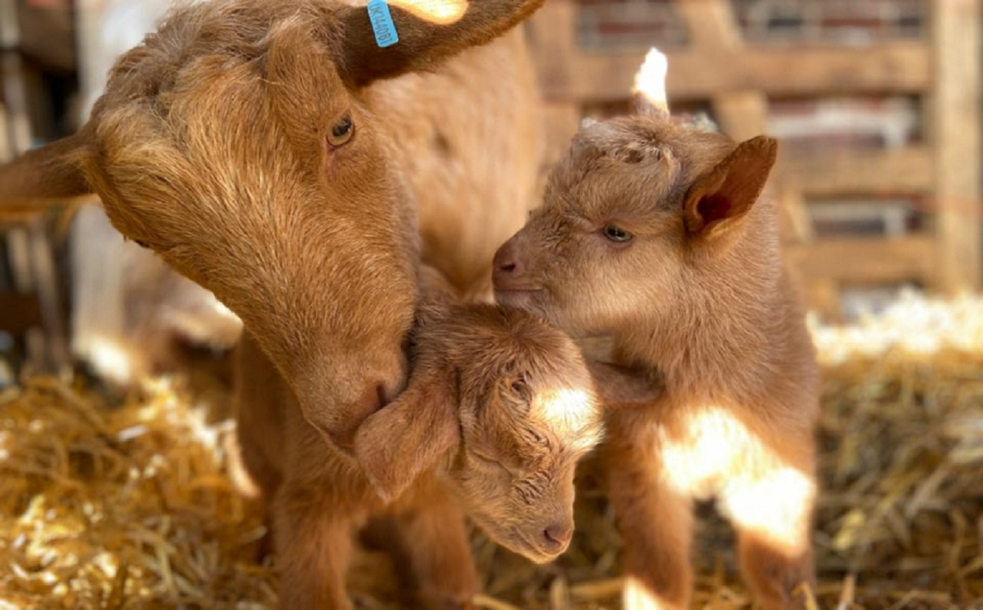 Visit our Rare Breed Farm Park
