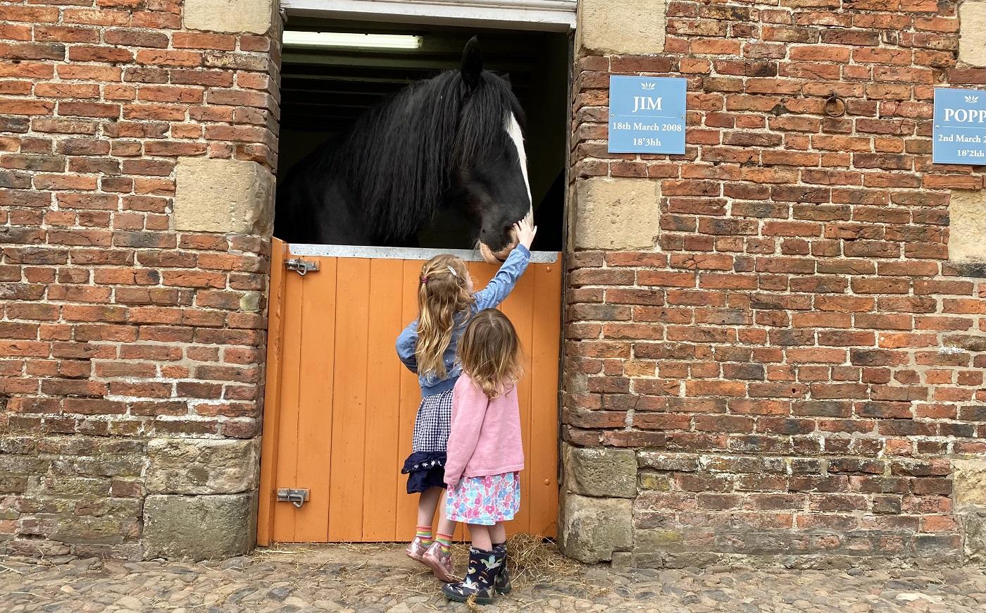 See Julies new born foal